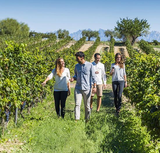 À la découverte de tourisme viticole bio