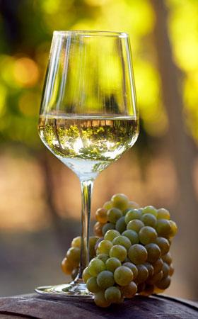Les vins blancs légers